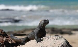 Up Close and Personal: The Galapagos Islands