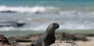 Travel in the Galapagos Islands