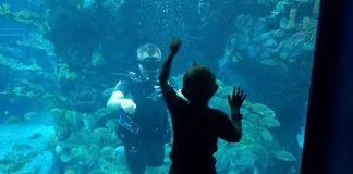 Diving at Epcot's Living Seas Pavilion at Walt Disney World. Flickr/Major Nelson