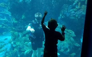 Diving at Epcot's Living Seas Pavilion at Walt Disney World. Flickr/Major Nelson