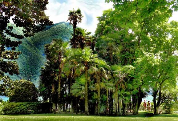 Palm trees in Lugano. Photo by Annie Palovcik
