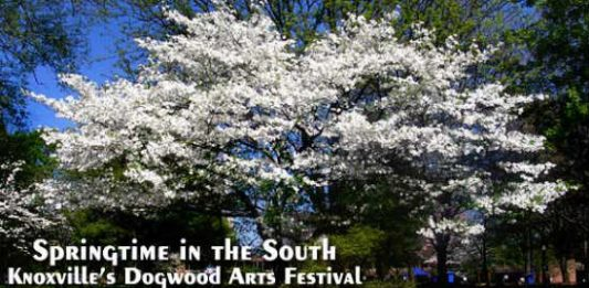 Springtime in the South: Knoxville's Dogwood Arts Festival