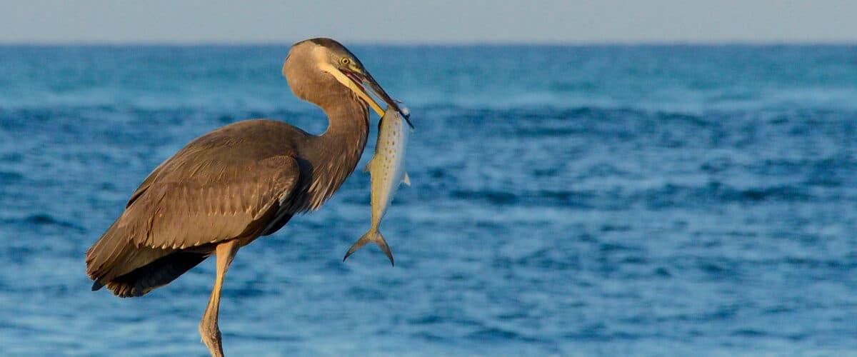 Fishing in Siesta Key, Florida.