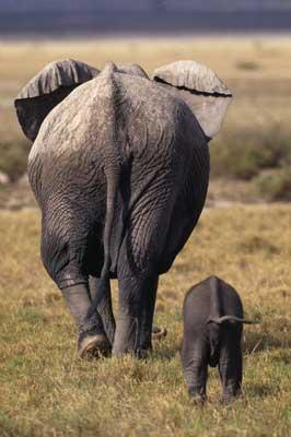 Samburu National Reserve is home to elephants, zebra, leopards, warthogs and more.