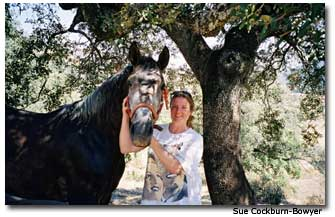 Sue Cockburn Bowyer and the Andalusion horse Biko.
