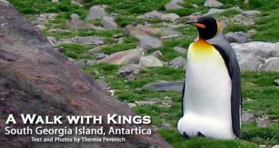 The island is home to large amounts of penguins and other wildlife.