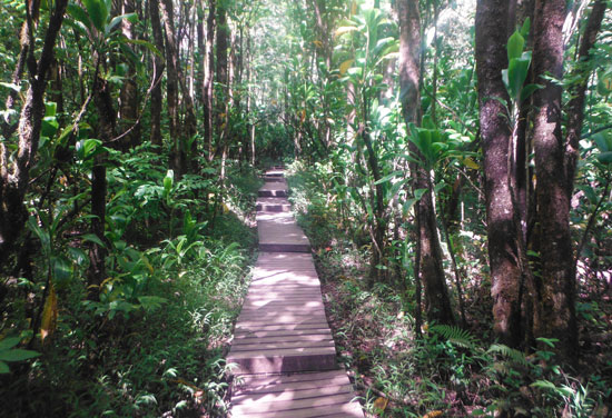 Hiking through the bamboo forest on the Pipiwaitrail trail in Maui. Photo by Gina Kremer