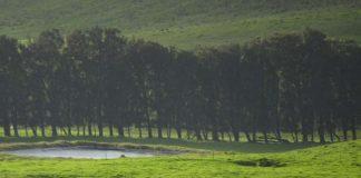 The Island of Hawaii has many large ranches. Photo by Benjamin Rader