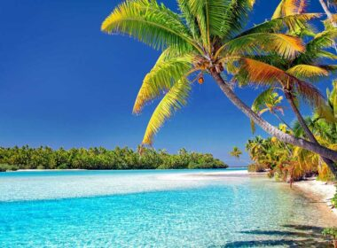 Palm trees on Cook Islands