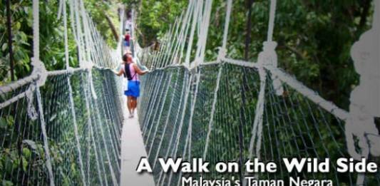 A Walk on the Wild Side: Malaysia's Taman Negara