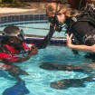 Practicing in the pool before our dive. Photo by Cece Wildeman