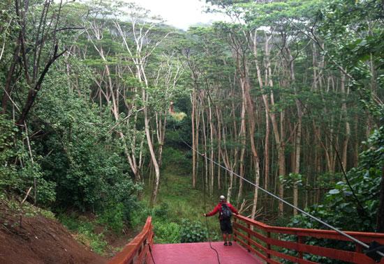 Koloa Zipline Tours has eight different ziplines on the beautiful Grove Farm in Kauai.