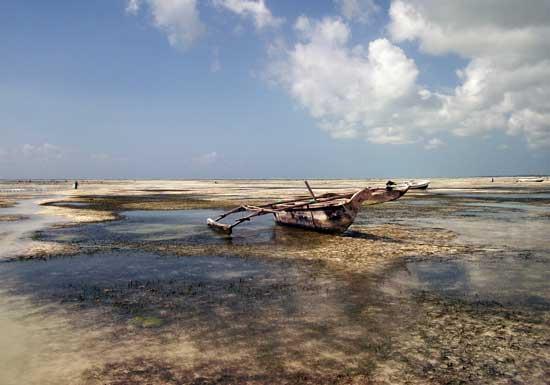 Along the beach in Zanzibar. Photo by Cece Wildeman