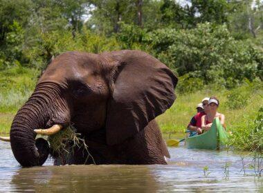 Zambian Safari: Paddling the Zambezi