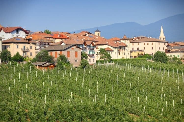 Wine tasting at a Trentino winery is a favorite passtime