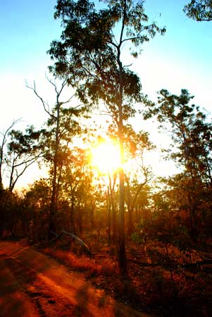 A golden sun sets in Kakadu National Park. Photo by Angharad Rees
