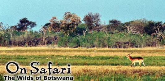 On Safari: The Wilds of Botswana