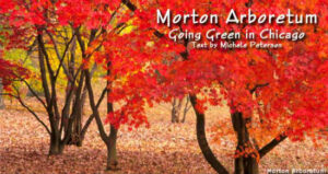 Chicago's Morton Arboretum