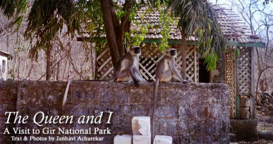 The Queen and I: A Visit to Gir Forest National Park