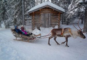 White Christmas:  An Australian in Lapland