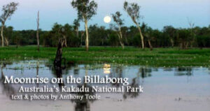 Moonrise on the Billabong: Australia's Kakadu National Park