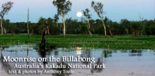 Moonrise on the Billabong: Australia's Kakadu National Park
