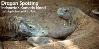 Travel to Komodo Island