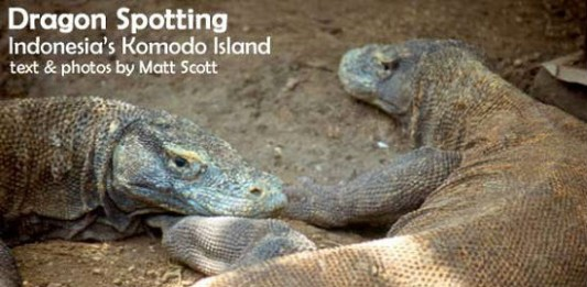 Dragon Spotting on Indonesia's Komodo Island
