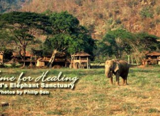 Thailand Elephant Sanctuary