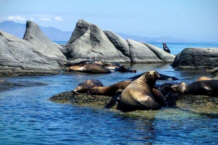 Sea lions at Loreto Bay National Marine Park Baja California