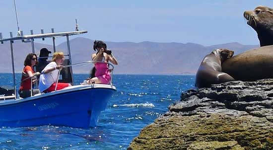 Sea lions delight visitors near Loreto Bay National Marine Park. Photo by Bob Schulman