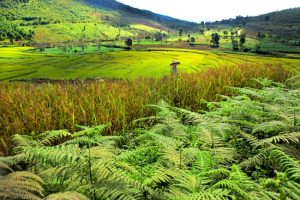 Lost in Time in a Golden Land: Myanmar Travel