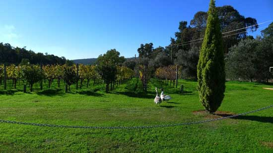 Follow one of the wine trails in Perth