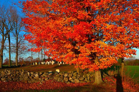 Fall foliage in Turner, Maine. Photo courtesy Visit Maine.