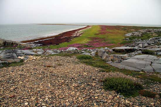 Churchill, Manitoba is located just south of the Arctic Circle. In the summer, brightly colored lichen covers the tundra. Photo by Travel Manitoba