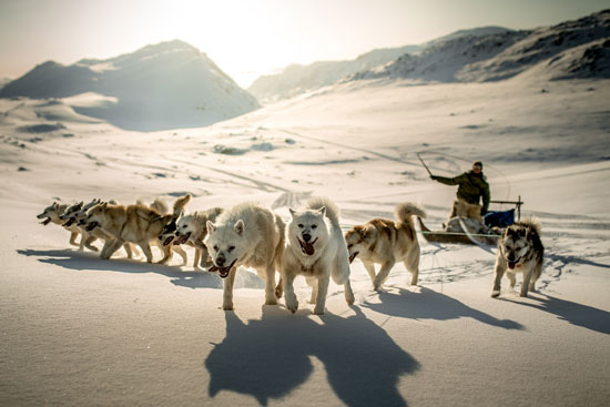 Dog sledding in Greenland is a necessity for locals, and a popular activity for tourists too. Photo by Visit Greenland
