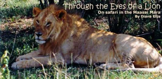 On Safari in Maasai Mara: Through The Eyes of a Lion