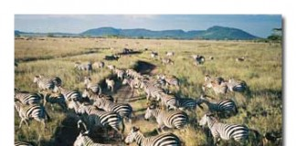 Travel in the Serenghetti
