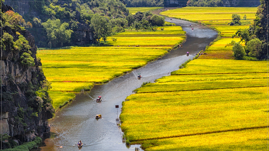Travel in Vietnam - Beautiful rice fields in Tam Coc Vietnam
