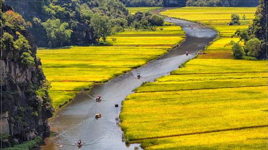 Beautiful rice fields in Tam Coc Vietnam