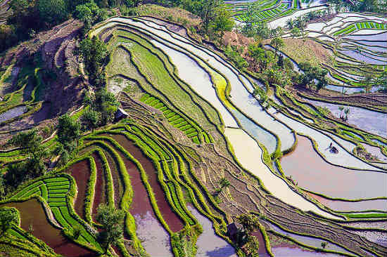 In Yunnan, the rice terraces are practical and beautiful.  Photo by FLICKR/The rice terraces in Yunnan catch the light. Photo by FLICKR/ Hoang Giang Hai