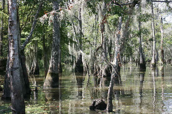 Alligators can be found it these waters.