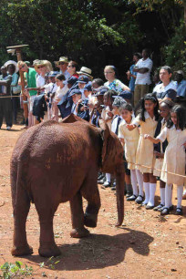 One of the elephants introduces themselves.
