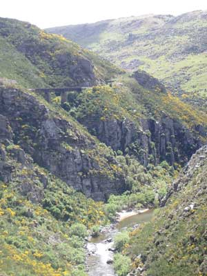 Trestle bridges support the railway high above the Taieri Gorge. Photo by Catherine Fancher