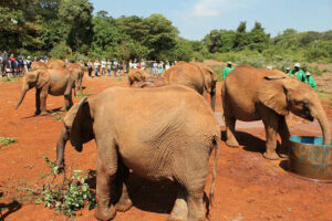 Nairobi, Kenya: To Save an Elephant