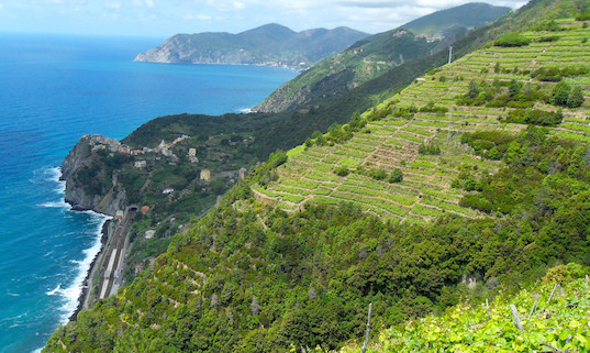 The view from the Cinque Terre