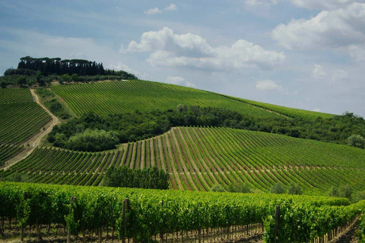Explore Tuscany: A Beginner's Guide to Wine Tasting in Italy