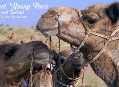 Camel safari in India: Best Travel Experience in India