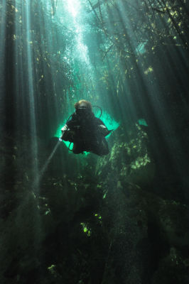 Diving in the Cenotes of the Yucata - Divers can swim beneath the mangrove roots.