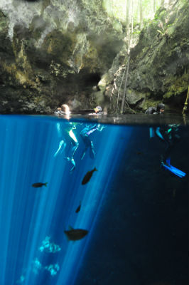 Fish swim beneath the divers as they surface.